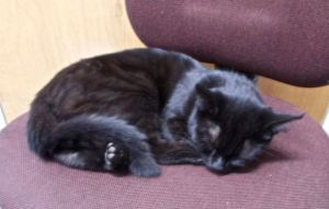 LC, the farm kitten, curled up asleep.